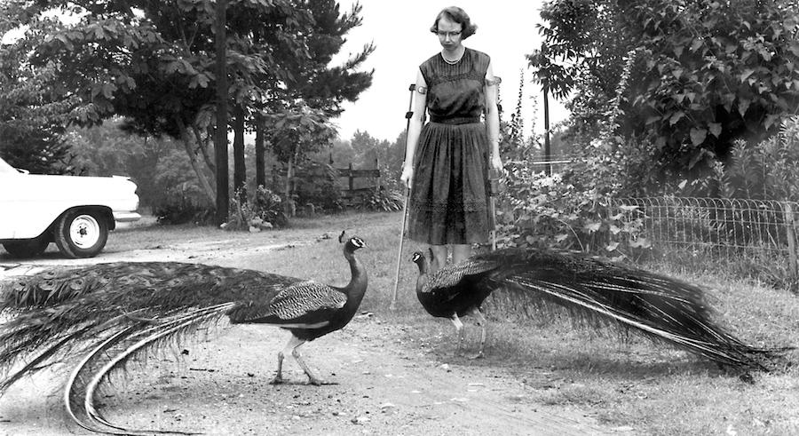 flannery o'connor peacocks andalusia farm