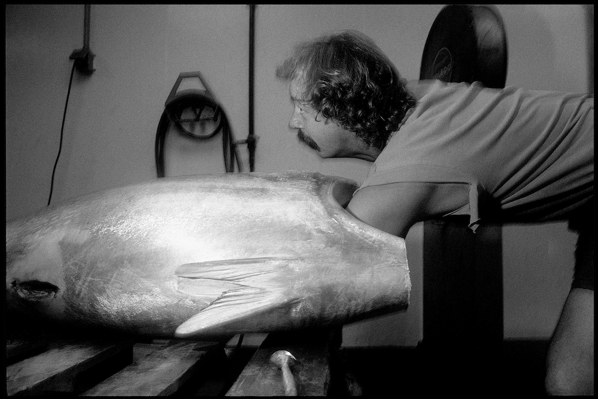 Icing Tuna, Cape Ann Tuna, 1998