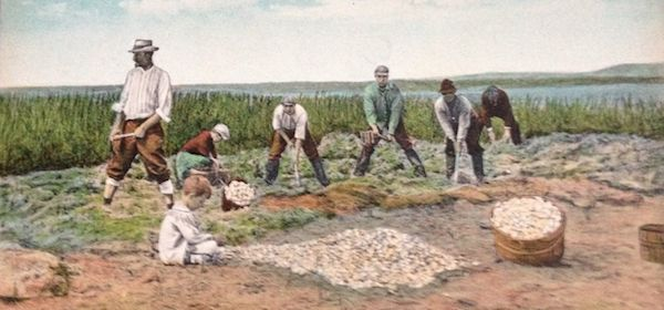 clam diggers