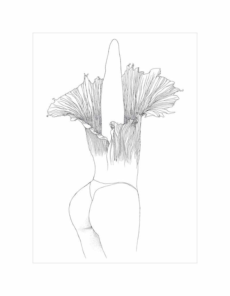 avie's dreams makeda lewis corpse flower