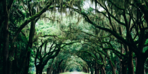 trees southern gothic