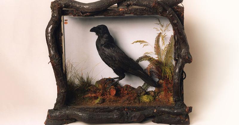 Meet the Beloved Pet Ravens of Charles Dickens | Literary Hub