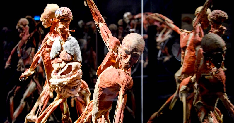 The Exhibit That Challenged Our Understanding Of Death And The Human Body Literary Hub