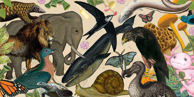 50 of the Best New Nonfiction Books About the Natural World