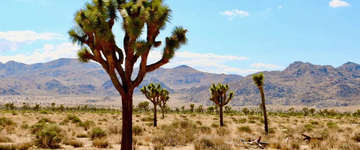 10 California Crime Novels That Aren't Set in Los Angeles or San Francisco