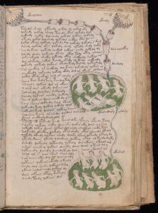 Voynich-Manuscript-2-Credit-Beinecke-Lib